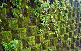 Камень в облицовке наружных поверхностей